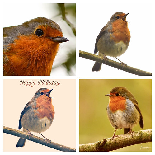 The Robins Collection - Greeting Cards