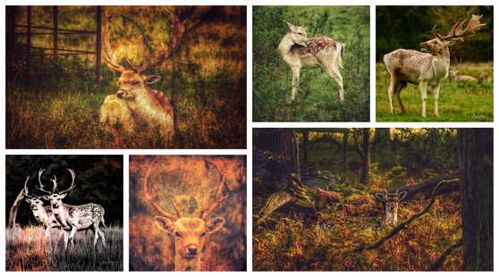 stags and bucks