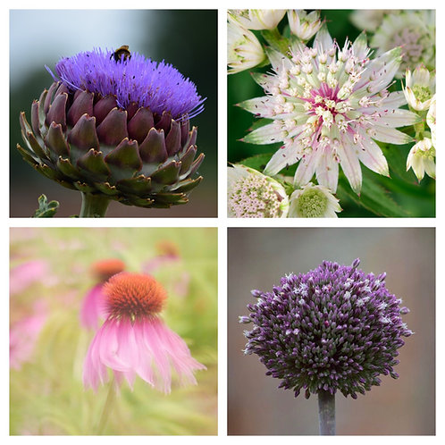 The Garden Favourites Collection - Greeting Cards