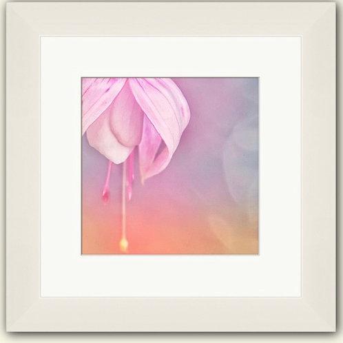 Pastel Fuchsia Photoart Framed Print