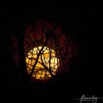 Tangled Moon