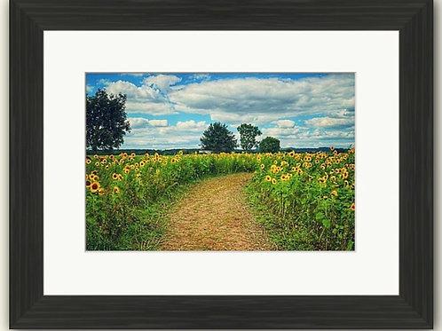 The Sunflower Field Framed Print