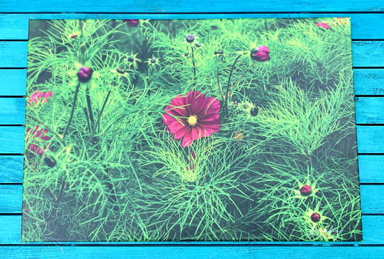 COsmos 3 (60 by 40)