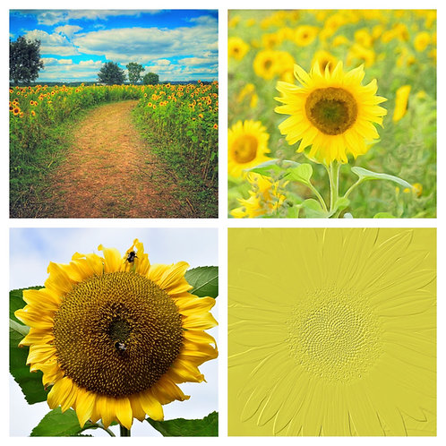 The Sunflowers Collection - Greeting Cards