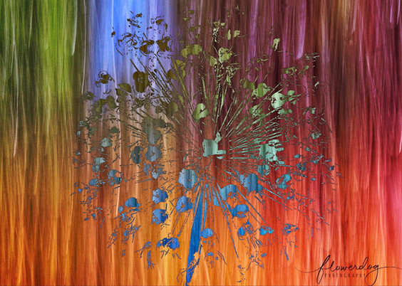 Allium Photoart