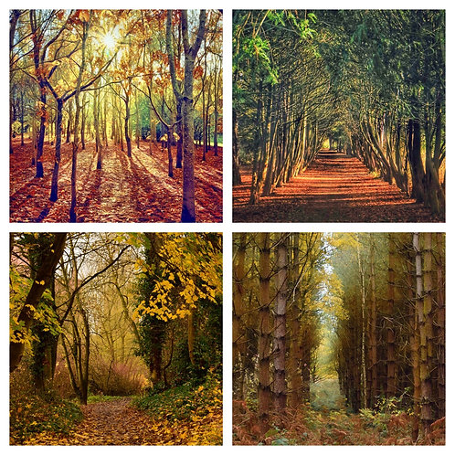 The Autumn Trees Collection - Greeting Cards