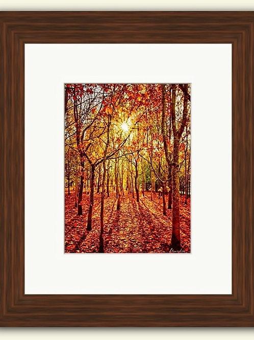 Sunburst Woods Framed Print