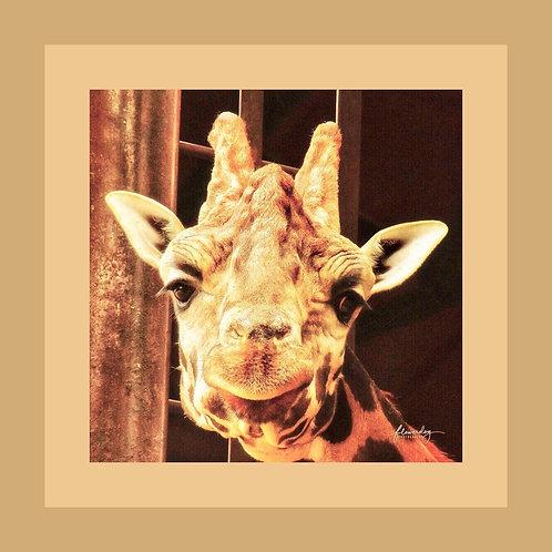 Smiling Giraffe Personalised eCard