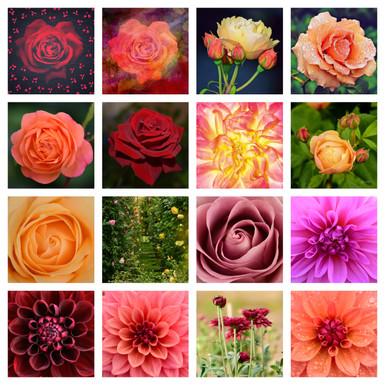Roses and Dahlias.jpg