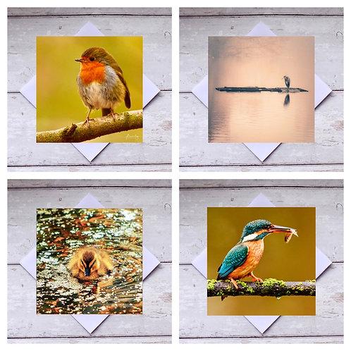 Birds - Mixed 1 Greeting Cards