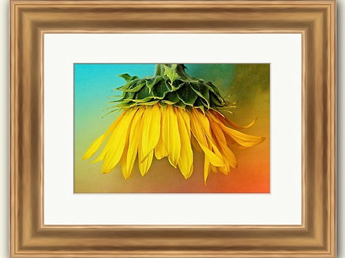 Textured Sunflower Framed Print