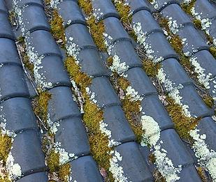 Toiture en tuiles, couverte de mousses, algues vertes, demoussage necessaire,