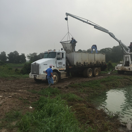 Loading Fish into Truck