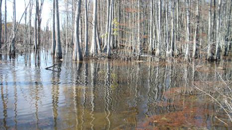 Sky Lake Hunting Property