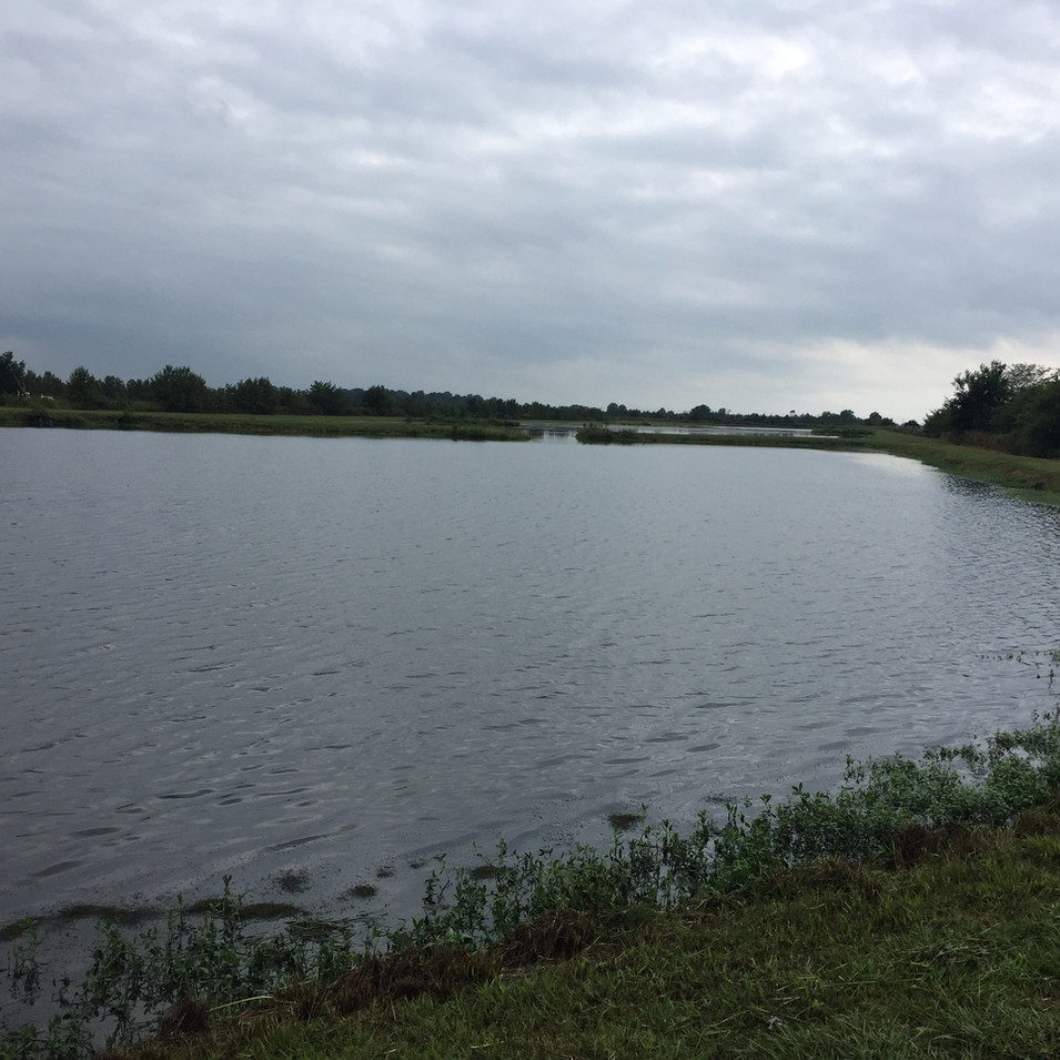 Bass Ponds 4