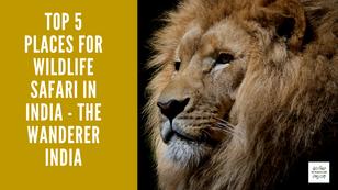 Top 5 Places for Wildlife Safari in India - TWI