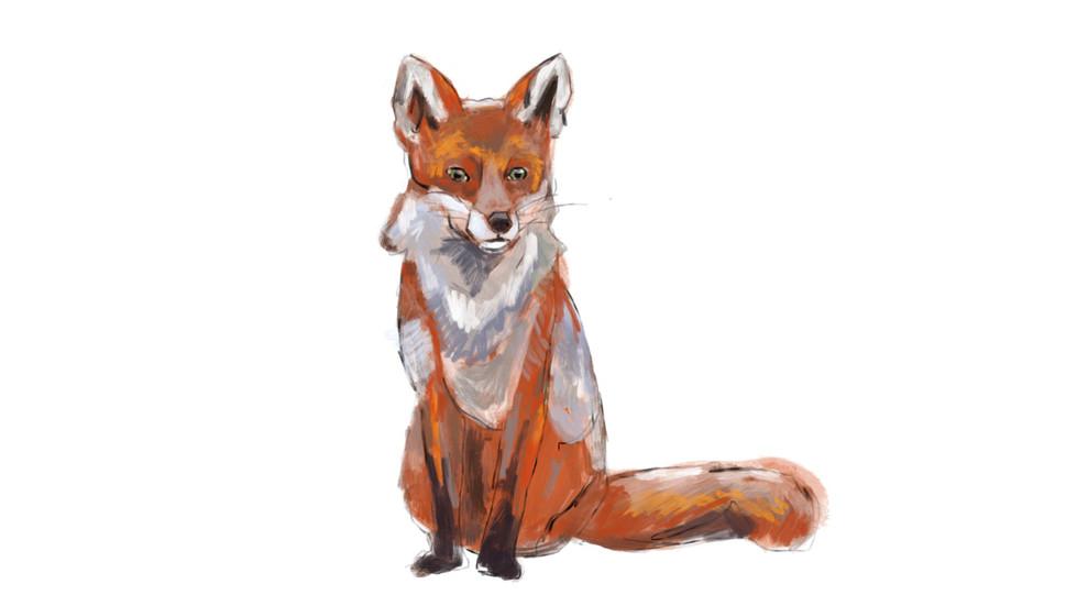 Fuchs_8_web_.jpg