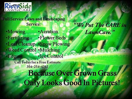 Over-Grown Grass.jpg