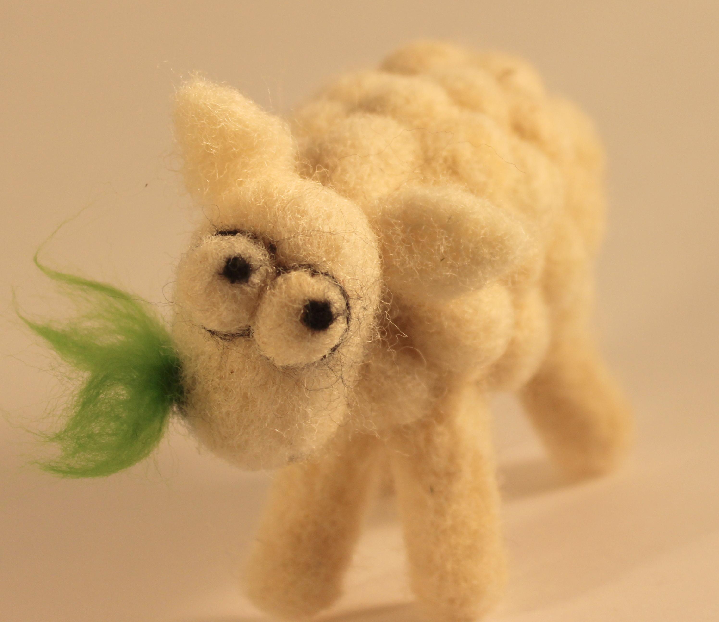 Sheepish sheep