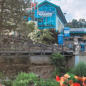 Visit Ripley's Aquarium of The Smokies with Us! 📍🦈