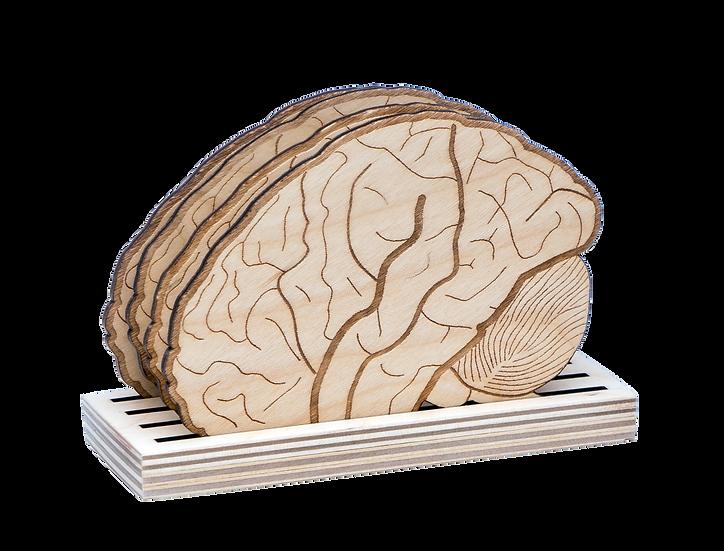 "Coaster-""Brains"""