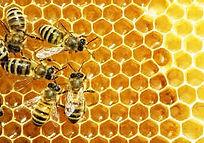 Honey and bees.jpg