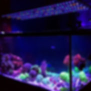 Orphek-Coral Compass-OR2 Bar LED45.jpg