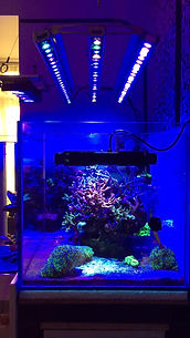 Orphek-Coral Compass-OR2 Bar LED6.jpg