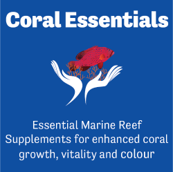 Starting out with Coral Essentials