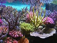 Aquarium-corals-reef.jpg