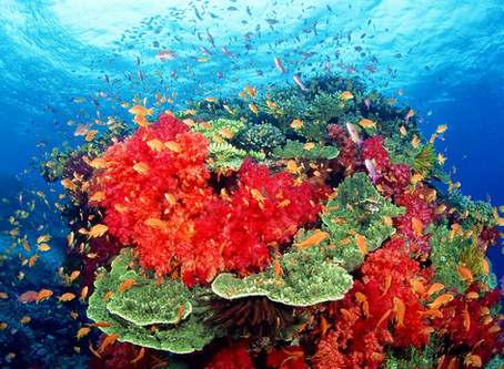 What do corals have to do with medicine?