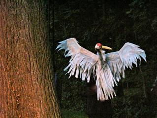 Histoire des oiseaux qui voulaient connaitre le bout du monde