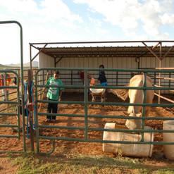 Out Door Horse Stalls