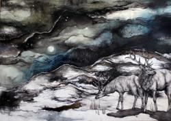 elk in the moonlight of solstice