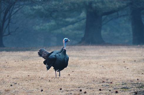 thanksgiving-5KT3Z6W.jpg