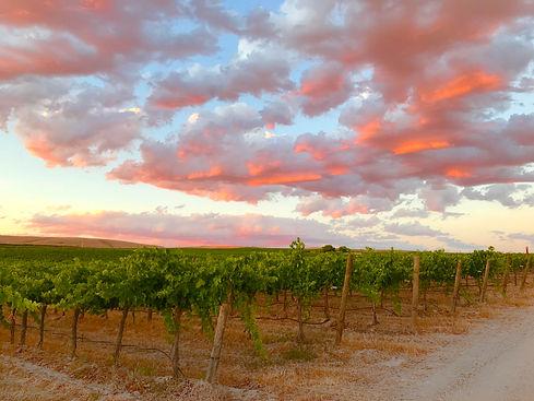 USE - sunset clouds vines.JPG