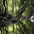 chinnar_forest_68.jpg