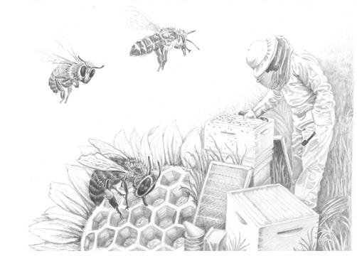 "Jennifer Fuchel, ""The Bee Keeper"", 2012,"