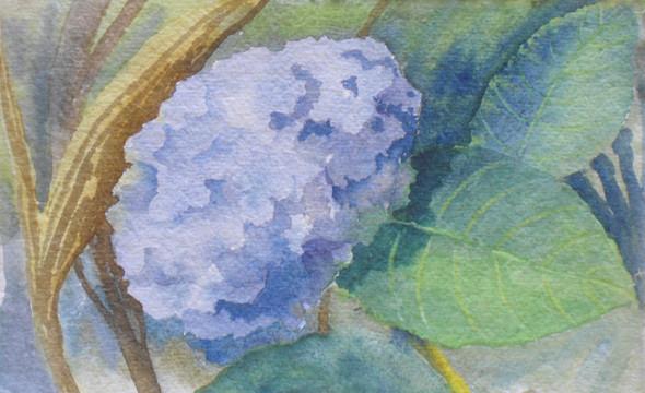 "Janet Hobbs, ""Blue Hydrangea"""