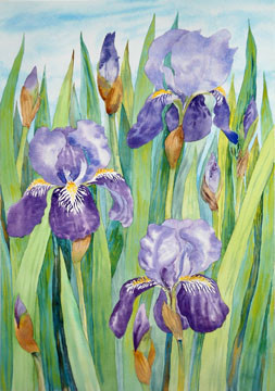 "Janet Hobbs, ""Purple Iris, Germanicus"""