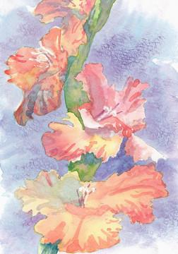 """Janet Hobbs, """"Variegated Gladiola"""""""