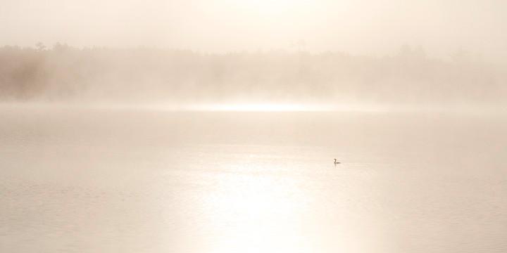 "Phil Olenick, ""Early Bird"" (2011)"