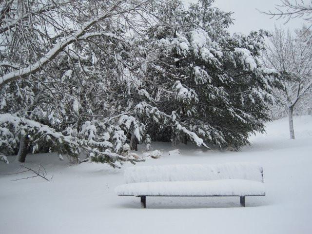 """Shola Adekeye, """"Frozen Bench"""""""