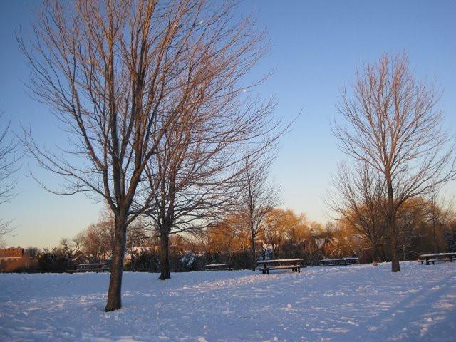 "Shola Adekeye, ""Trees on Ice"""