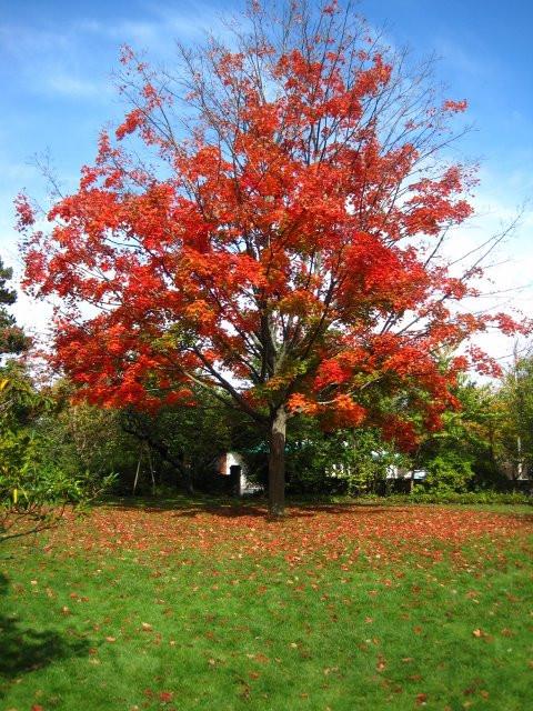 "Shola Adekeye, ""Autumn"""