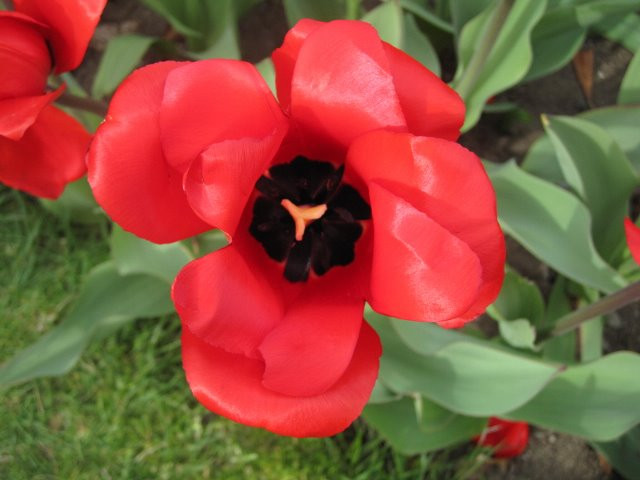 """Shola Adekeye, """"Red Flower"""""""