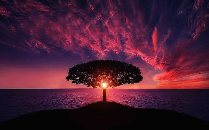 amazing sunset tree.jpg
