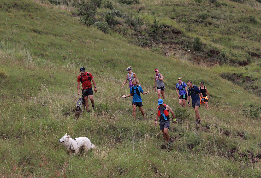 Swiss shephard dog teaching mountain runners how to move in the mountains