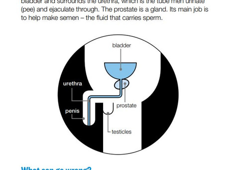 Know Your Prostate
