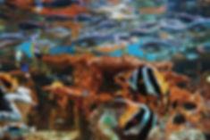 Under Water School of Fish